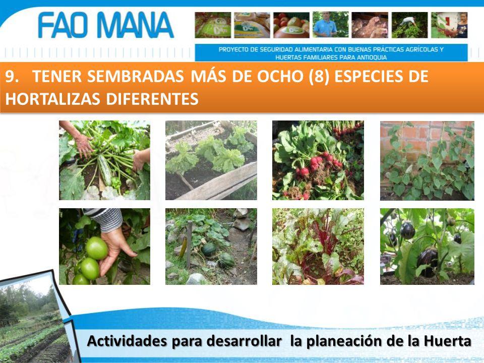 9. TENER SEMBRADAS MÁS DE OCHO (8) ESPECIES DE HORTALIZAS DIFERENTES Actividades para desarrollar la planeación de la Huerta