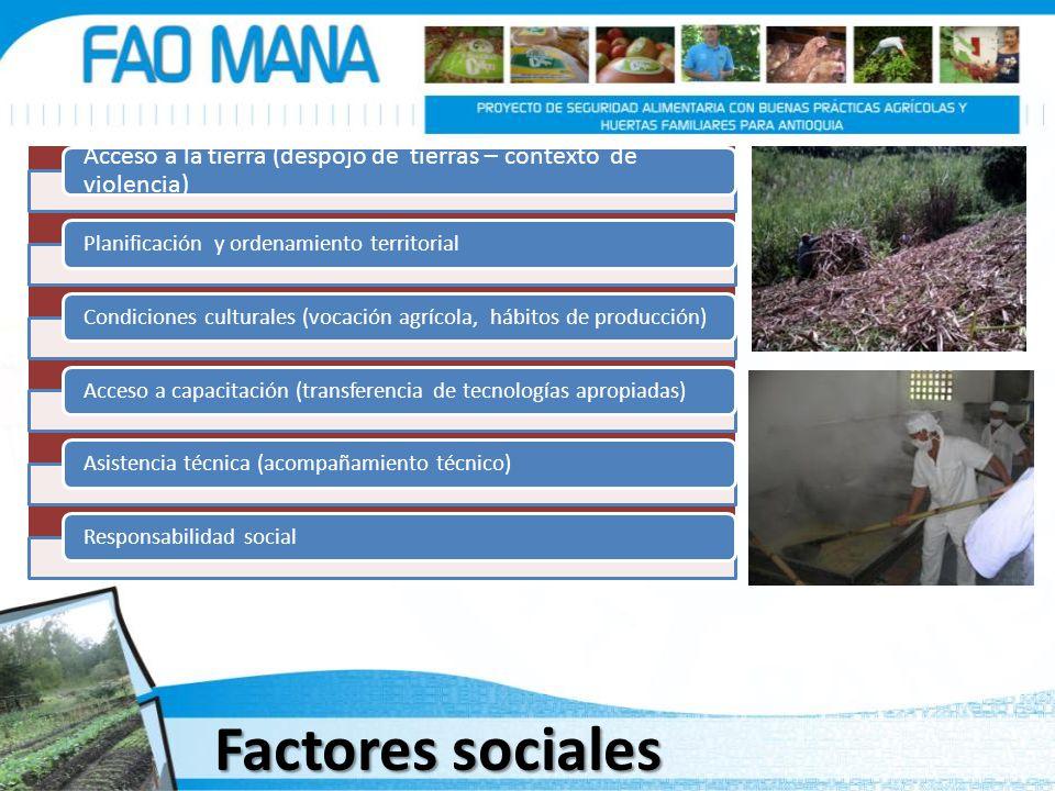 Factores sociales Acceso a la tierra (despojo de tierras – contexto de violencia) Planificación y ordenamiento territorialCondiciones culturales (voca
