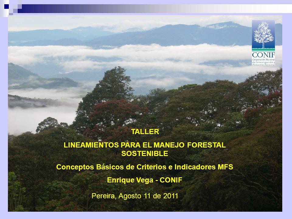 Contenido Enfoques actuales, conceptos de Manejo y Ordenación Forestal Criterios e Indicadores – CIFOR C&I OIMT-MAVDT Monitoreo de Areas Forestales Trabajo de Grupo