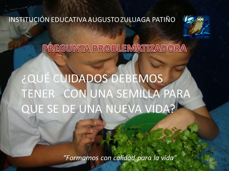 INSTITUCION EDUCATIVA AUGUSTO ZULUAGA PATIÑO Formamos con calidad para la vida ¿QUE CUIDADOS DEBEMOS TENER CON UNA SEMILLA PARA QUE SE DE UNA NUEVA VI