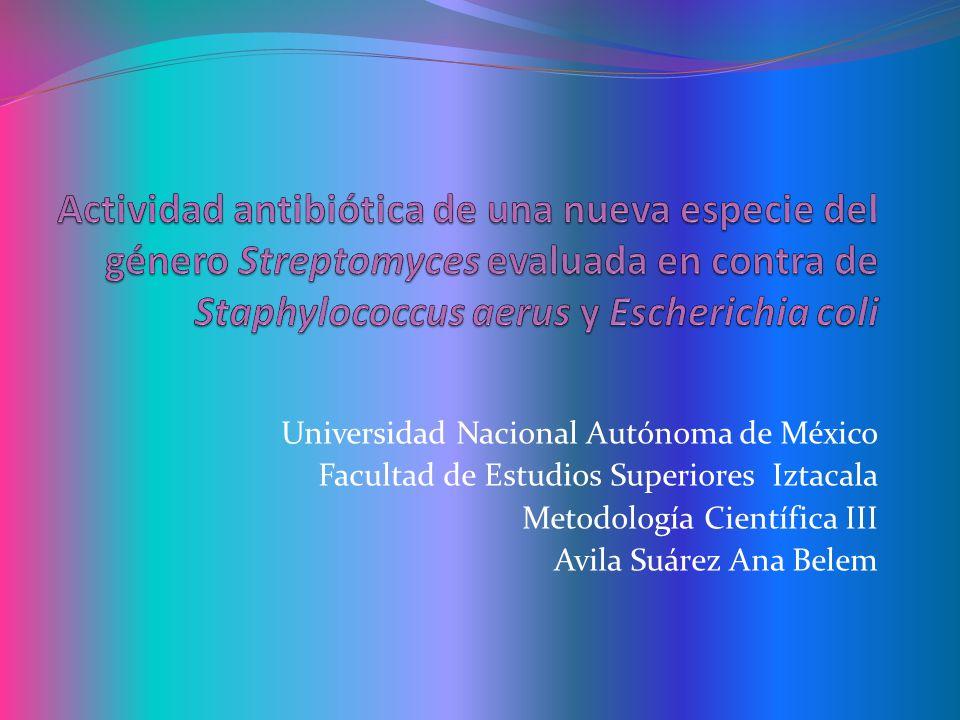 Conclusiones: La nueva cepa de Streptomyces sp.