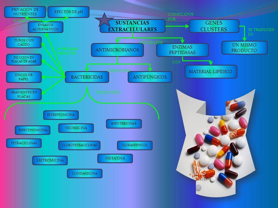SUSTANCIAS EXTRACELULARES GENES CLUSTERS UN MISMO PRODUCTO ANTIMICROBIANOS ENZIMAS PEPTIDASAS MATERIAL LIPÍDICO ANTIFÚNGICOSBACTERICIDAS ESTREPTOMICINA NEOMICINA ESPECTINOMICINA ERITROMICINA CLOROTETRACICLINAS TETRACICLINAS ANFOTERICINA B NISTATINA CLINDAMICINA CLORANFENICOL TUBOS CON CALDO DILUCIÓN EN PLACAS DE AGAR DISCOS DE PAPEL GRADIENTES EN PLACAS ENSAYOS ALTERNATIVOS EFECTOS DE pH PRIVACIÓN DE NUTRIENTES PUEDEN SER CON CODIFICADOS POR SE TRADUCEN EN PUEDEN SER SE PRUEBAN MEDIANTE EVITAN TALES COMO