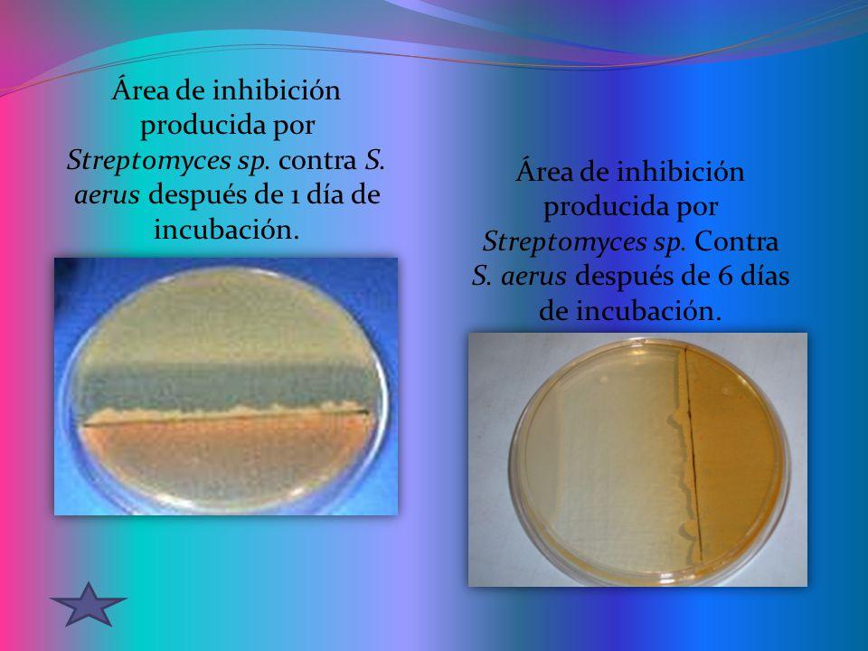 Área de inhibición producida por Streptomyces sp.contra S.