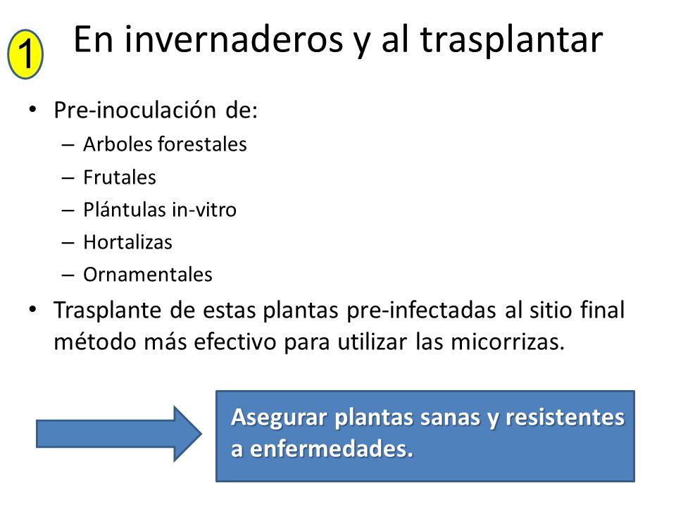 En invernaderos y al trasplantar Pre-inoculación de: – Arboles forestales – Frutales – Plántulas in-vitro – Hortalizas – Ornamentales Trasplante de es