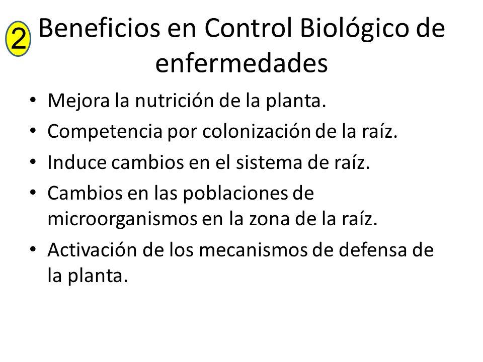 Beneficios en Control Biológico de enfermedades Mejora la nutrición de la planta. Competencia por colonización de la raíz. Induce cambios en el sistem