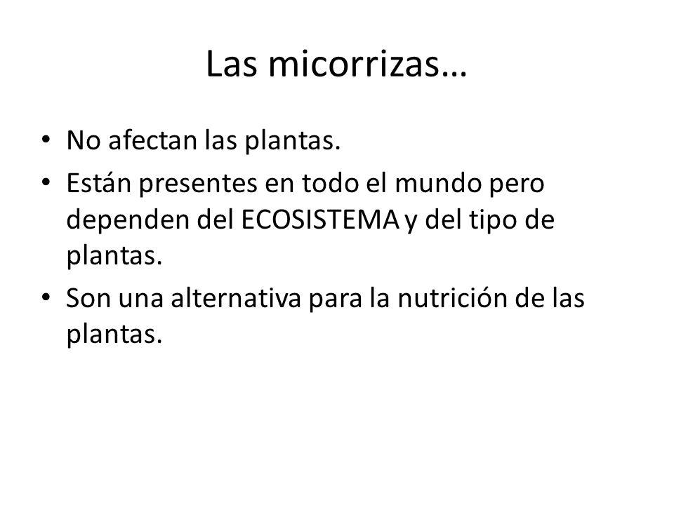 Las micorrizas… No afectan las plantas. Están presentes en todo el mundo pero dependen del ECOSISTEMA y del tipo de plantas. Son una alternativa para