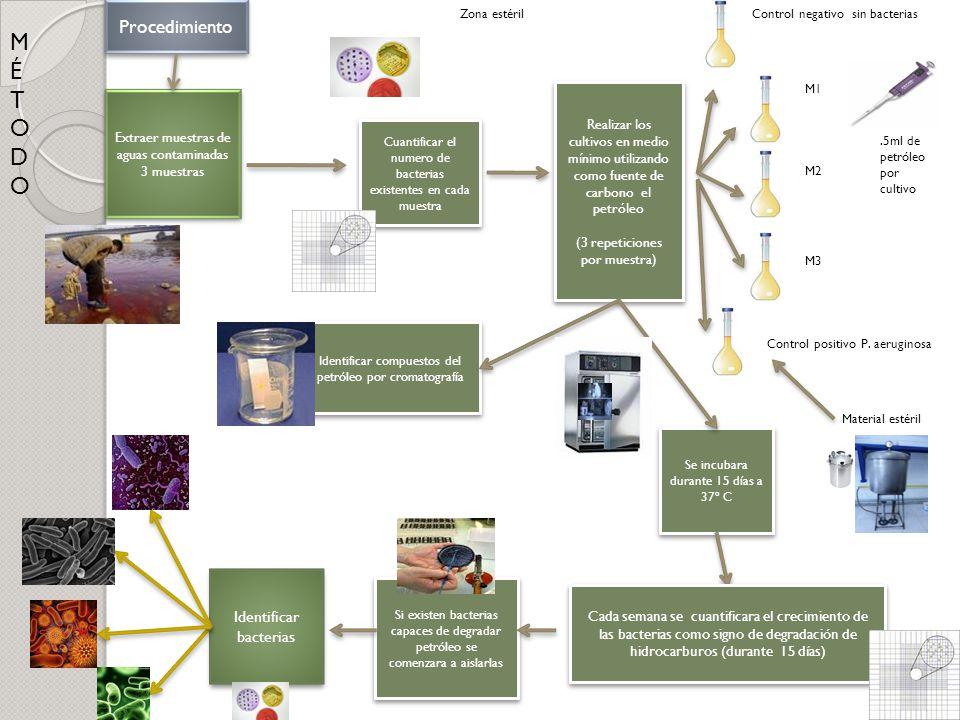Procedimiento Extraer muestras de aguas contaminadas 3 muestras Extraer muestras de aguas contaminadas 3 muestras Realizar los cultivos en medio mínim