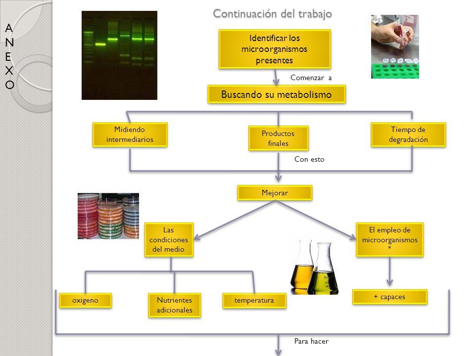 Continuación del trabajo ANEXOANEXO Identificar los microorganismos presentes Buscando su metabolismo Midiendo intermediarios Tiempo de degradación Pr
