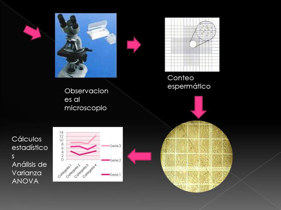 Observacion es al microscopio Conteo espermático Cálculos estadístico s Análisis de Varianza ANOVA