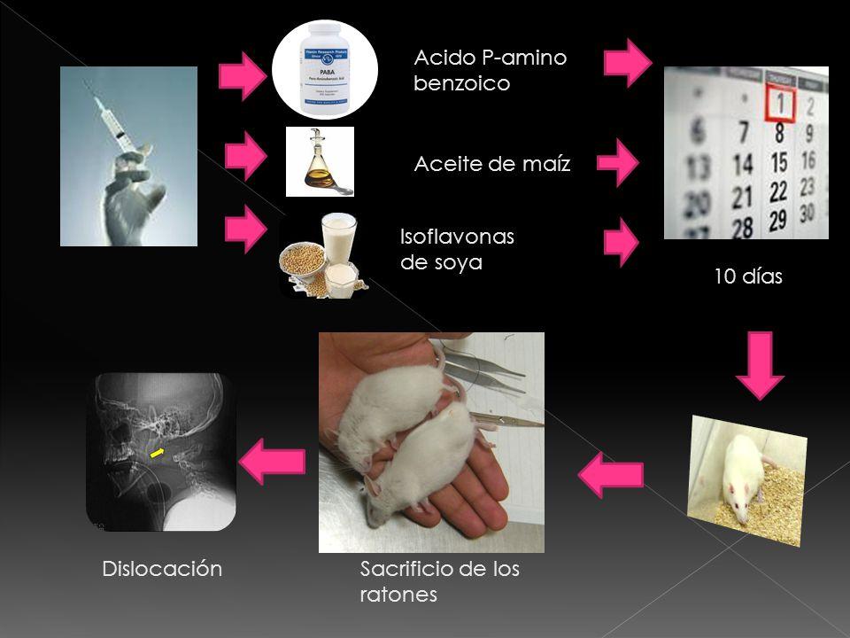 Hígado Riñones Vesículas Seminales Vesículas Seminales Se toma muestra espermática El contenido es colocado en la cámara de Neubauer