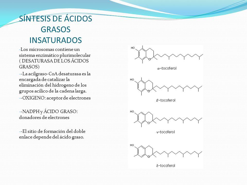 SÍNTESIS DE ÁCIDOS GRASOS INSATURADOS - Los microsomas contiene un sistema enzimático plurimolecular ( DESATURASA DE LOS ÁCIDOS GRASOS) - -La acilgras