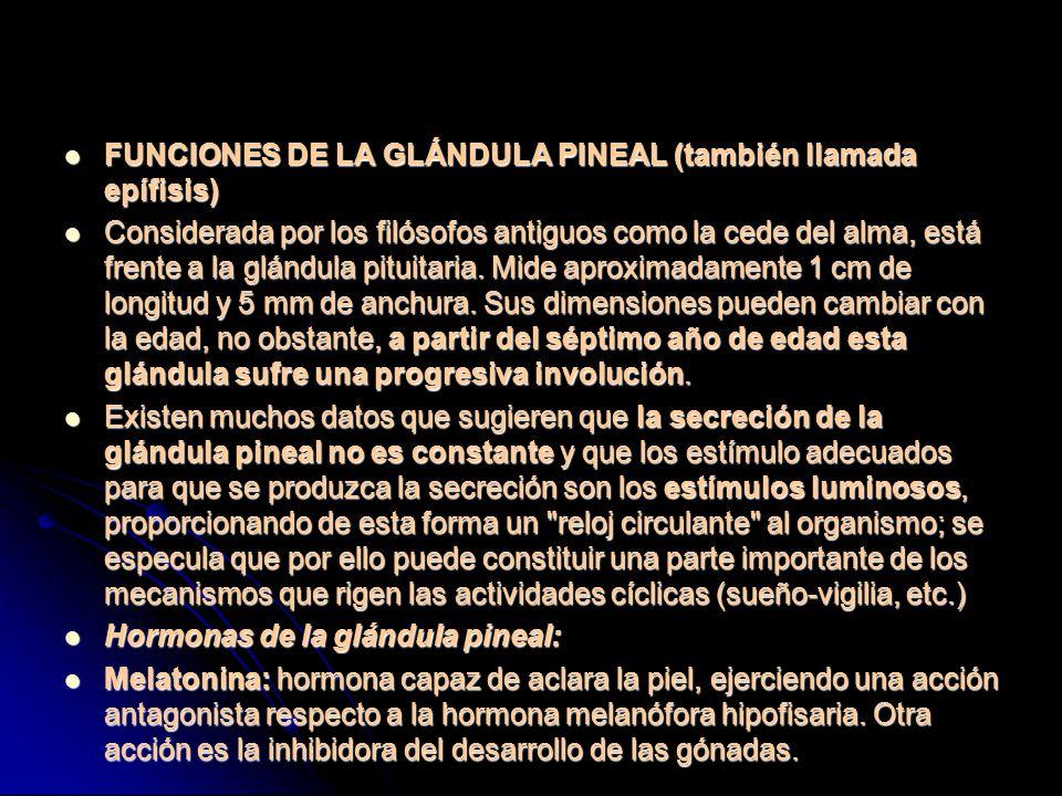 FUNCIONES DE LA GLÁNDULA PINEAL (también llamada epífisis) FUNCIONES DE LA GLÁNDULA PINEAL (también llamada epífisis) Considerada por los filósofos antiguos como la cede del alma, está frente a la glándula pituitaria.