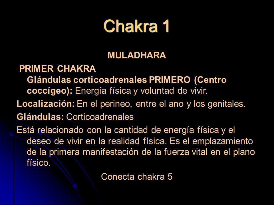 Chakra 1 MULADHARA PRIMER CHAKRA Glándulas corticoadrenales PRIMERO (Centro coccígeo): Energía física y voluntad de vivir.