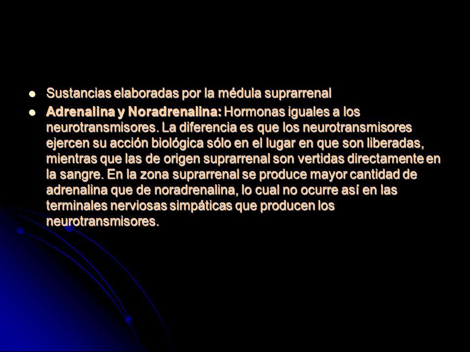 Sustancias elaboradas por la médula suprarrenal Sustancias elaboradas por la médula suprarrenal Adrenalina y Noradrenalina: Hormonas iguales a los neurotransmisores.