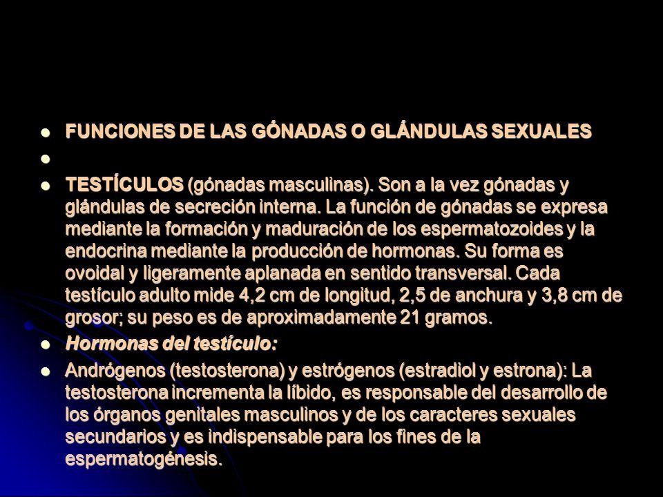 FUNCIONES DE LAS GÓNADAS O GLÁNDULAS SEXUALES FUNCIONES DE LAS GÓNADAS O GLÁNDULAS SEXUALES TESTÍCULOS (gónadas masculinas).