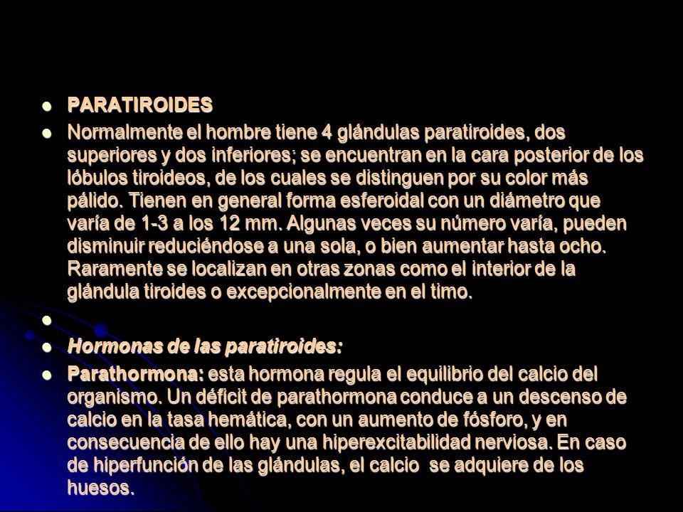 PARATIROIDES PARATIROIDES Normalmente el hombre tiene 4 glándulas paratiroides, dos superiores y dos inferiores; se encuentran en la cara posterior de los lóbulos tiroideos, de los cuales se distinguen por su color más pálido.