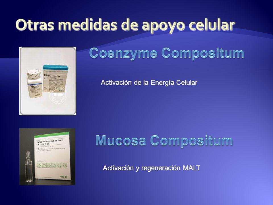 Activación de la Energía Celular Activación y regeneración MALT