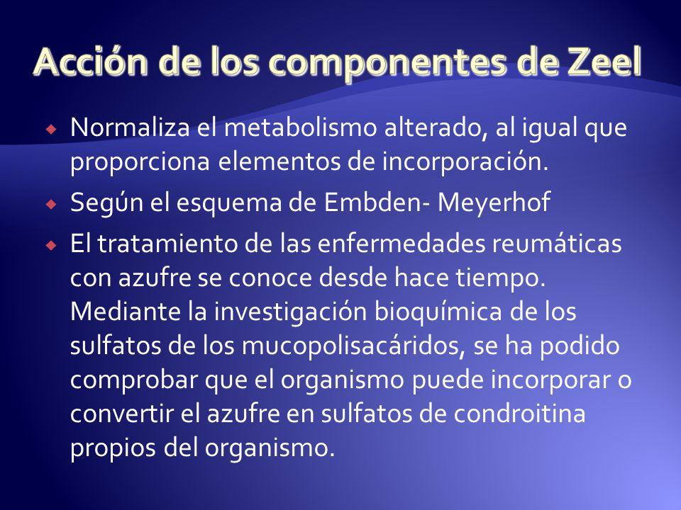 Normaliza el metabolismo alterado, al igual que proporciona elementos de incorporación. Según el esquema de Embden- Meyerhof El tratamiento de las enf