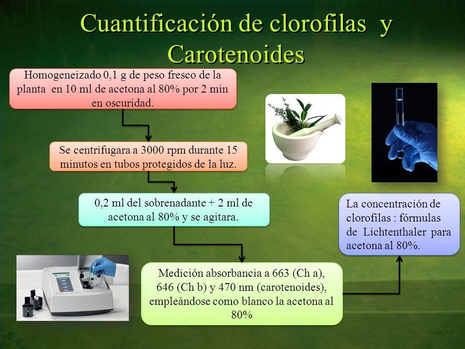Cuantificación de clorofilas y Carotenoides Homogeneizado 0,1 g de peso fresco de la planta en 10 ml de acetona al 80% por 2 min en oscuridad.