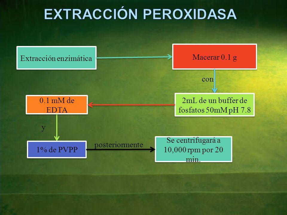 Extracción enzimática Macerar 0.1 g con 2mL de un buffer de fosfatos 50mM pH 7.8 0.1 mM de EDTA y 1% de PVPP posteriormente Se centrifugará a 10,000 rpm por 20 min.