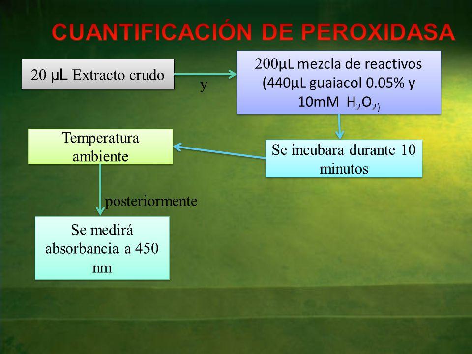 20 μL Extracto crudo y 200 µL mezcla de reactivos (440µL guaiacol 0.05% y 10mM H 2 O 2) Se incubara durante 10 minutos Temperatura ambiente posteriormente Se medirá absorbancia a 450 nm