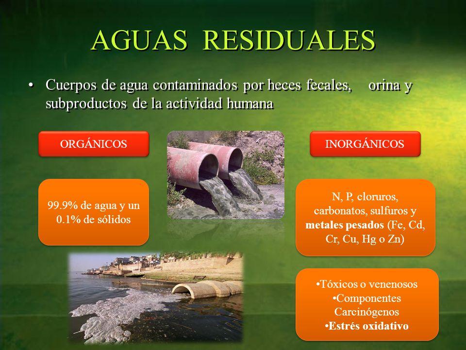AGUAS RESIDUALES Cuerpos de agua contaminados por heces fecales, orina y subproductos de la actividad humana ORGÁNICOS INORGÁNICOS N, P, cloruros, carbonatos, sulfuros y metales pesados (Fe, Cd, Cr, Cu, Hg o Zn) 99.9% de agua y un 0.1% de sólidos Tóxicos o venenosos Componentes Carcinógenos Estrés oxidativo Tóxicos o venenosos Componentes Carcinógenos Estrés oxidativo