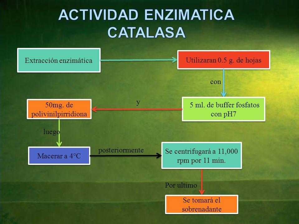 Extracción enzimática Utilizaran 0.5 g.de hojas con 5 ml.
