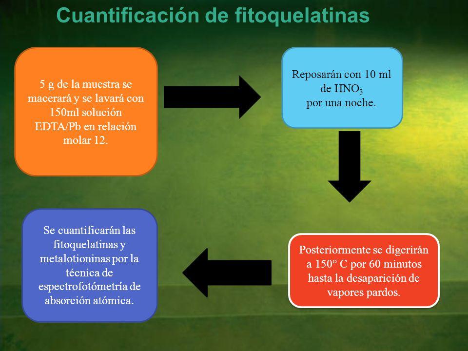 Cuantificación de fitoquelatinas 5 g de la muestra se macerará y se lavará con 150ml solución EDTA/Pb en relación molar 12.