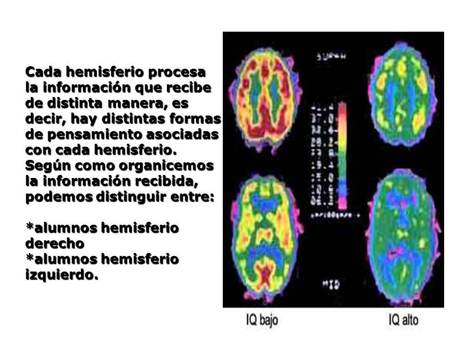 Cada hemisferio procesa la información que recibe de distinta manera, es decir, hay distintas formas de pensamiento asociadas con cada hemisferio. Seg