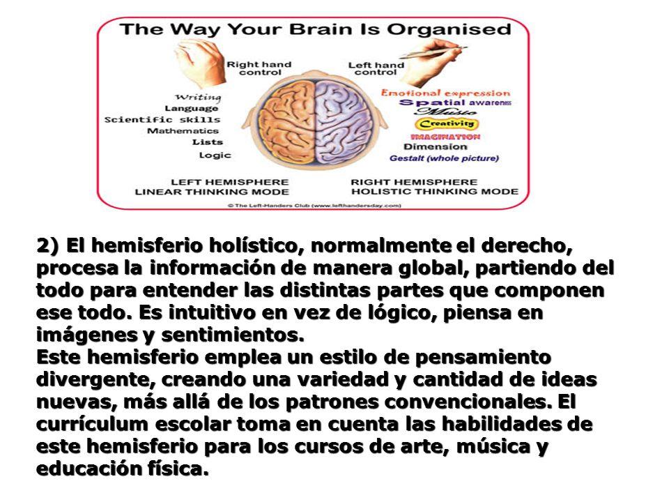 2) El hemisferio holístico, normalmente el derecho, procesa la información de manera global, partiendo del todo para entender las distintas partes que