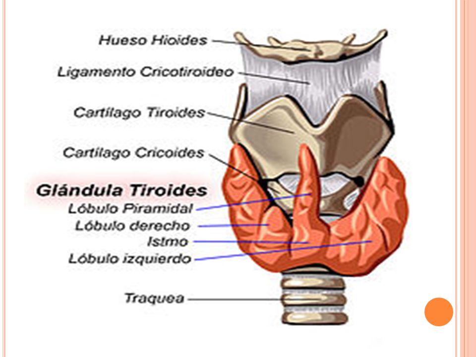 Puntaje mayor de 45: altamente sugestivo de tormenta tiroidea.
