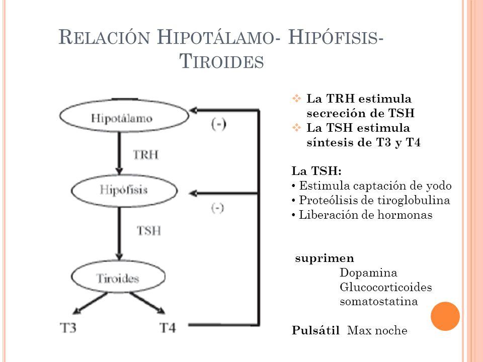 R ELACIÓN H IPOTÁLAMO - H IPÓFISIS - T IROIDES La TRH estimula secreción de TSH La TSH estimula síntesis de T3 y T4 La TSH: Estimula captación de yodo