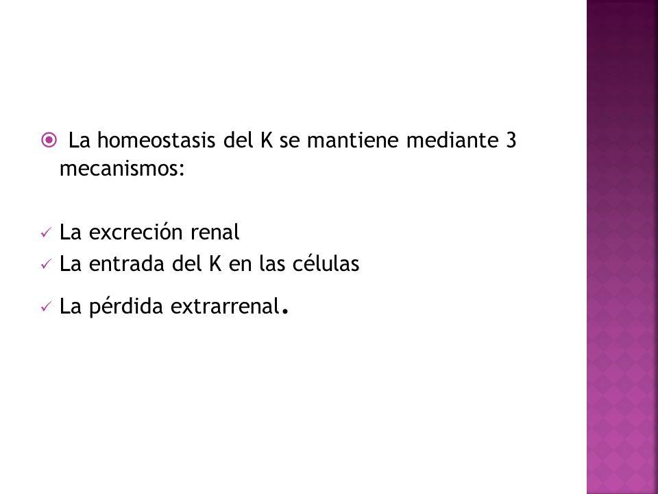 La homeostasis del K se mantiene mediante 3 mecanismos: La excreción renal La entrada del K en las células La pérdida extrarrenal.