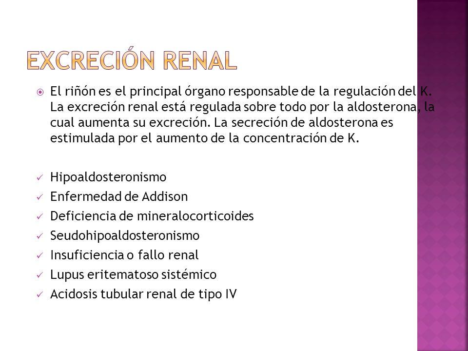 El riñón es el principal órgano responsable de la regulación del K. La excreción renal está regulada sobre todo por la aldosterona, la cual aumenta su