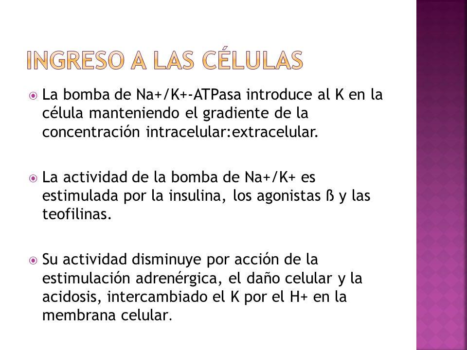 La bomba de Na+/K+-ATPasa introduce al K en la célula manteniendo el gradiente de la concentración intracelular:extracelular. La actividad de la bomba