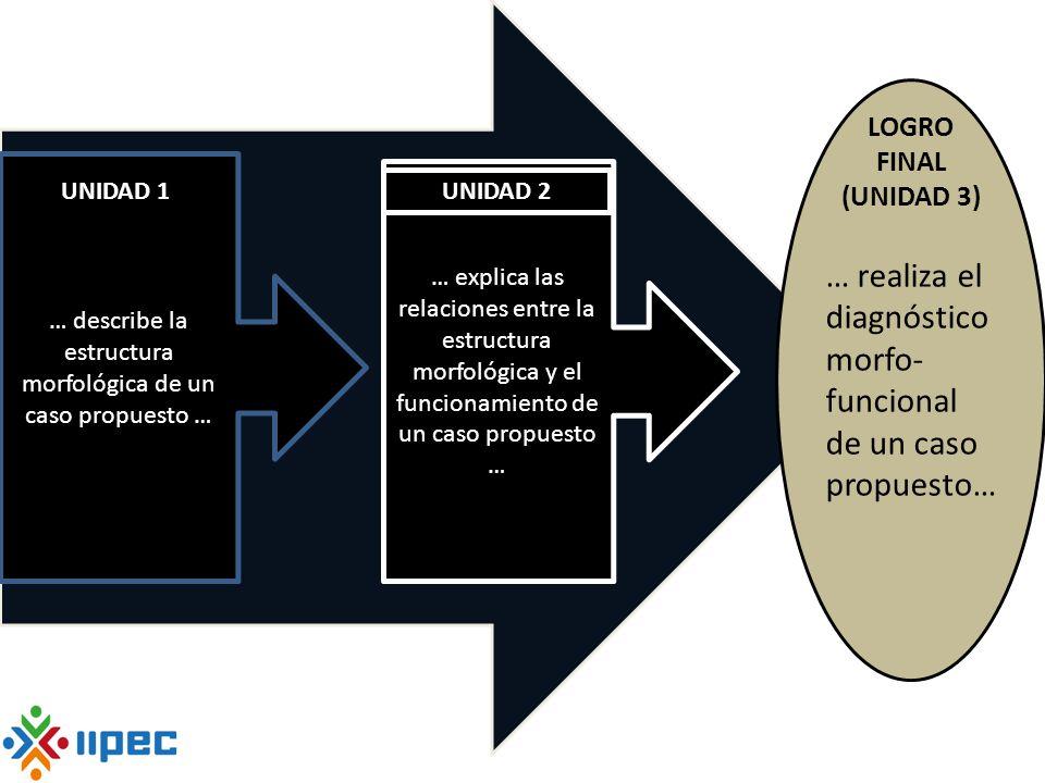 Otro ejemplo de secuencia de aprendizaje … realiza el diagnóstico morfo- funcional de un caso propuesto… LOGRO FINAL (UNIDAD 3) … describe la estructu