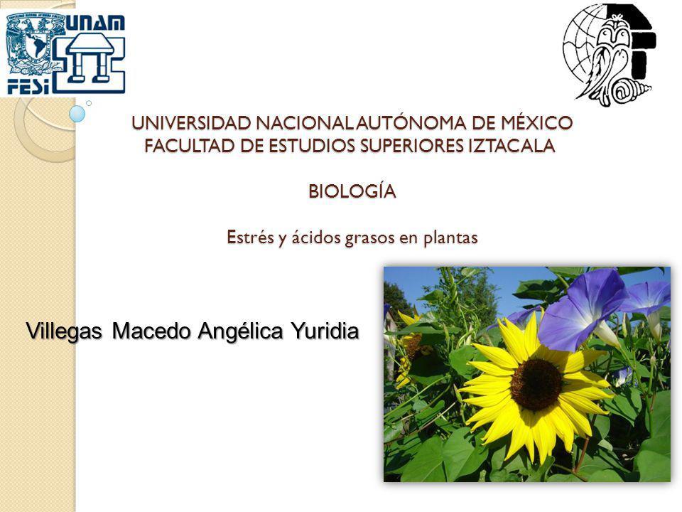UNIVERSIDAD NACIONAL AUTÓNOMA DE MÉXICO FACULTAD DE ESTUDIOS SUPERIORES IZTACALA BIOLOGÍA Estrés y ácidos grasos en plantas Villegas Macedo Angélica Y