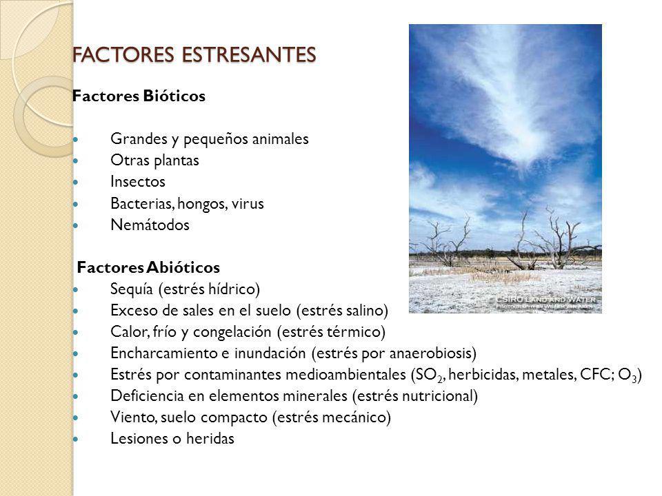 FACTORES ESTRESANTES Factores Bióticos Grandes y pequeños animales Otras plantas Insectos Bacterias, hongos, virus Nemátodos Factores Abióticos Sequía