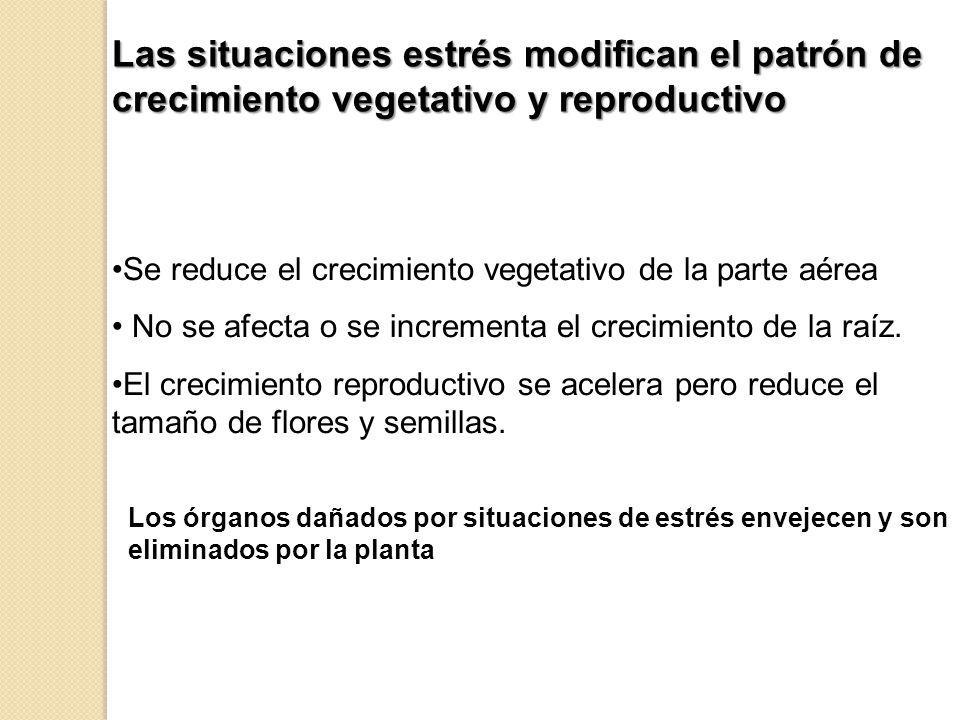 Se reduce el crecimiento vegetativo de la parte aérea No se afecta o se incrementa el crecimiento de la raíz. El crecimiento reproductivo se acelera p