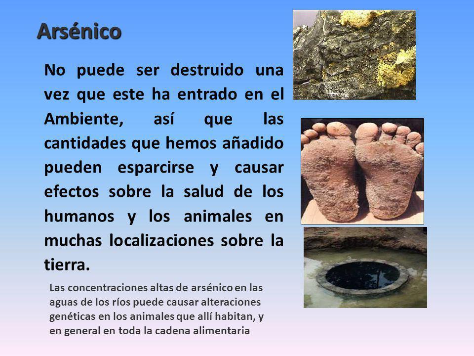 Arsénico No puede ser destruido una vez que este ha entrado en el Ambiente, así que las cantidades que hemos añadido pueden esparcirse y causar efectos sobre la salud de los humanos y los animales en muchas localizaciones sobre la tierra.