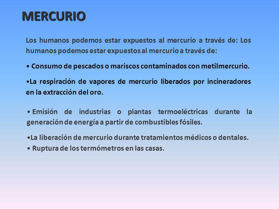 Los humanos podemos estar expuestos al mercurio a través de: Consumo de pescados o mariscos contaminados con metilmercurio. La respiración de vapores