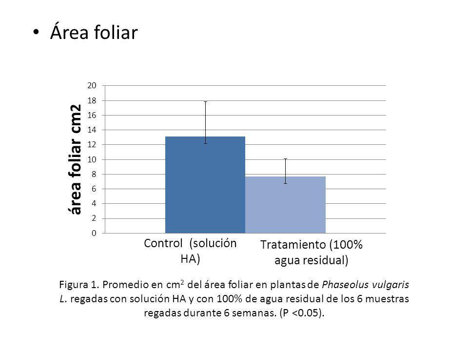 Área foliar Figura 1. Promedio en cm 2 del área foliar en plantas de Phaseolus vulgaris L. regadas con solución HA y con 100% de agua residual de los