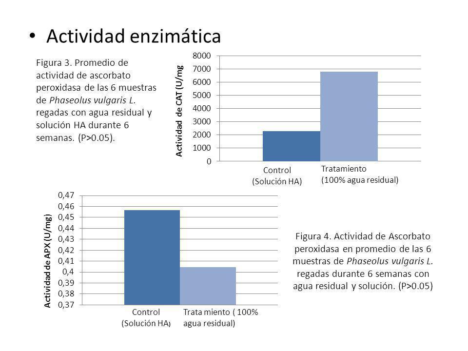 Actividad enzimática Figura 4. Actividad de Ascorbato peroxidasa en promedio de las 6 muestras de Phaseolus vulgaris L. regadas durante 6 semanas con