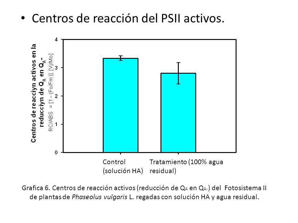 Control (solución HA) Tratamiento (100% agua residual) Centros de reacción del PSII activos. Grafica 6. Centros de reacción activos (reducción de Q A