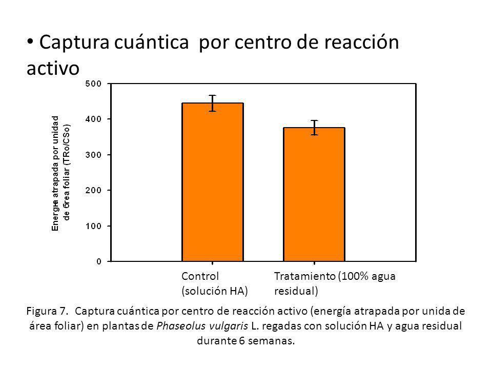 Captura cuántica por centro de reacción activo Control (solución HA) Tratamiento (100% agua residual) Figura 7. Captura cuántica por centro de reacció