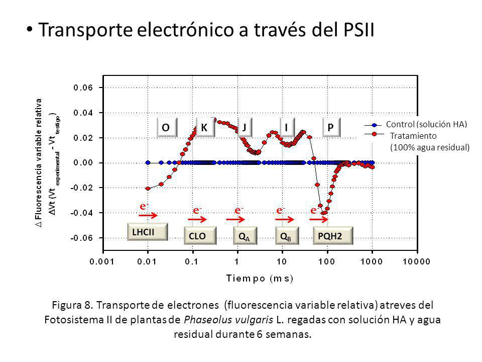 OJKIP e-e- e-e- e-e- e-e- e-e- LHCII QAQA CLOPQH2QBQB Transporte electrónico a través del PSII Control (solución HA) Tratamiento (100% agua residual)