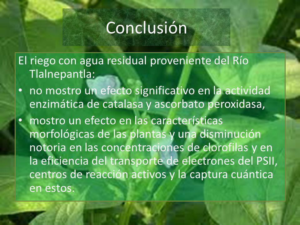 Conclusión El riego con agua residual proveniente del Río Tlalnepantla: no mostro un efecto significativo en la actividad enzimática de catalasa y asc