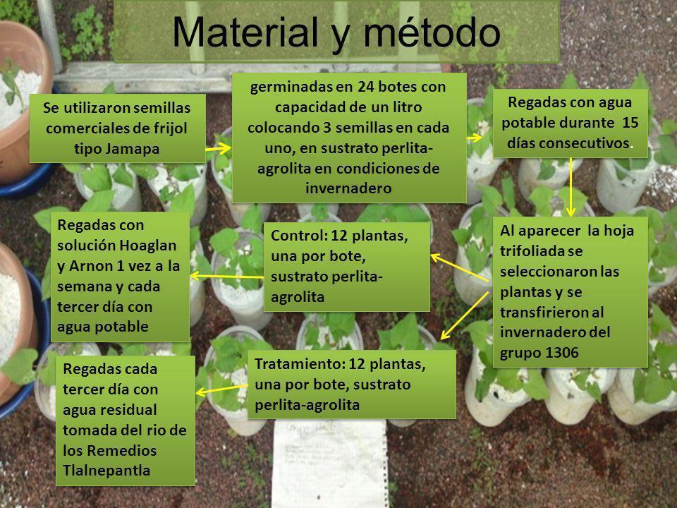 Material y método Se utilizaron semillas comerciales de frijol tipo Jamapa germinadas en 24 botes con capacidad de un litro colocando 3 semillas en ca