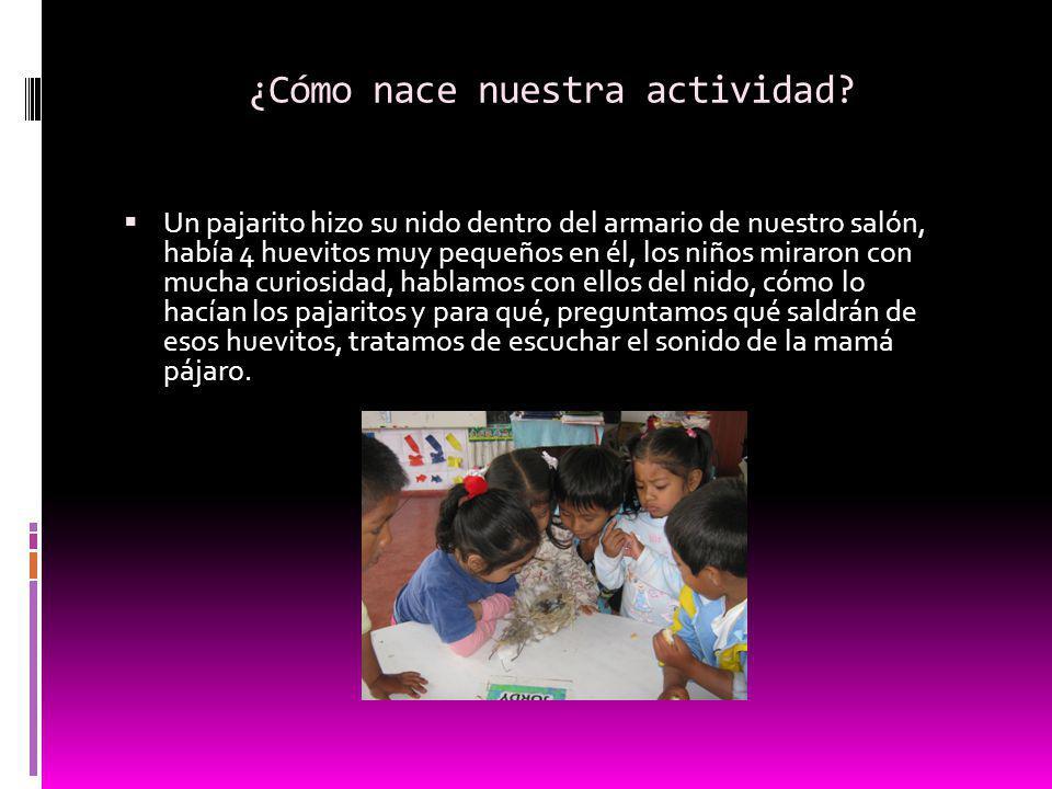 ¿Cómo nace nuestra actividad? Un pajarito hizo su nido dentro del armario de nuestro salón, había 4 huevitos muy pequeños en él, los niños miraron con