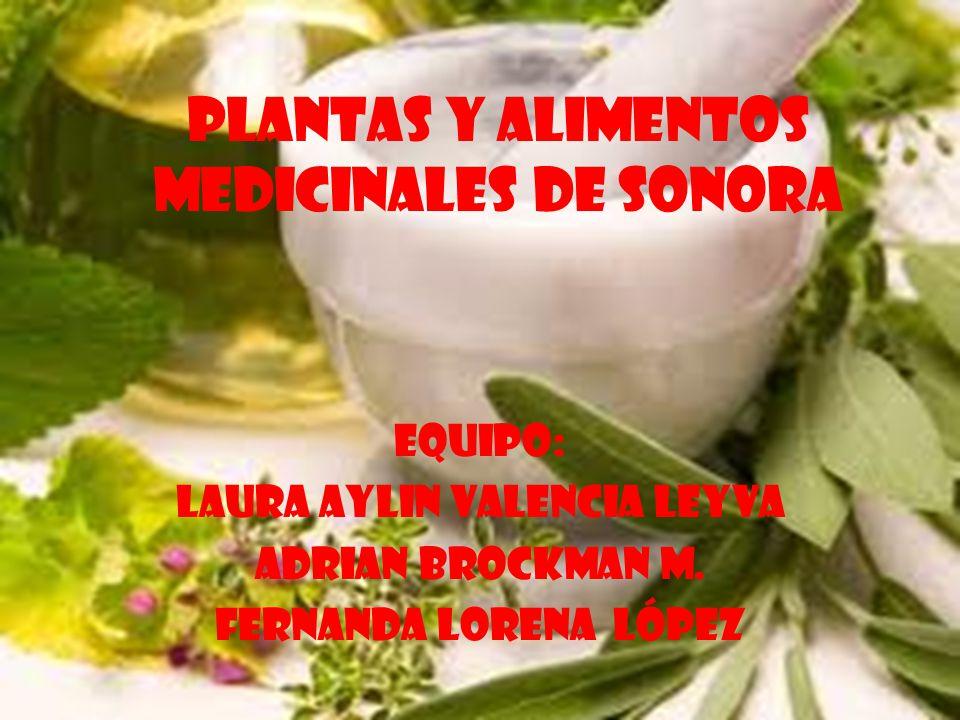 Plantas y alimentos medicinales de sonora Equipo: Laura aylin valencia leyva Adrian brockman m. Fernanda Lorena López